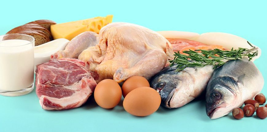 High protein diet for fat burning